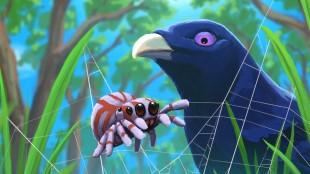 A spider and a bower bird in Webbed
